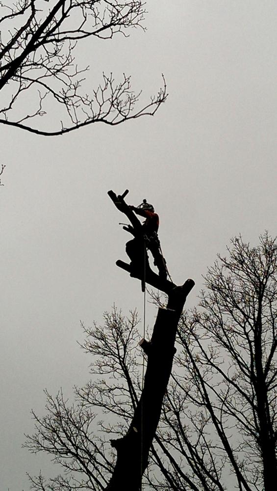 Tree dismantling wakefield