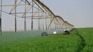 ري محاصيل العروة الشتوية بنسبة 88.7% بمكتب النالة بالمناقل