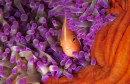 fish-coral