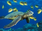 sea-turtle