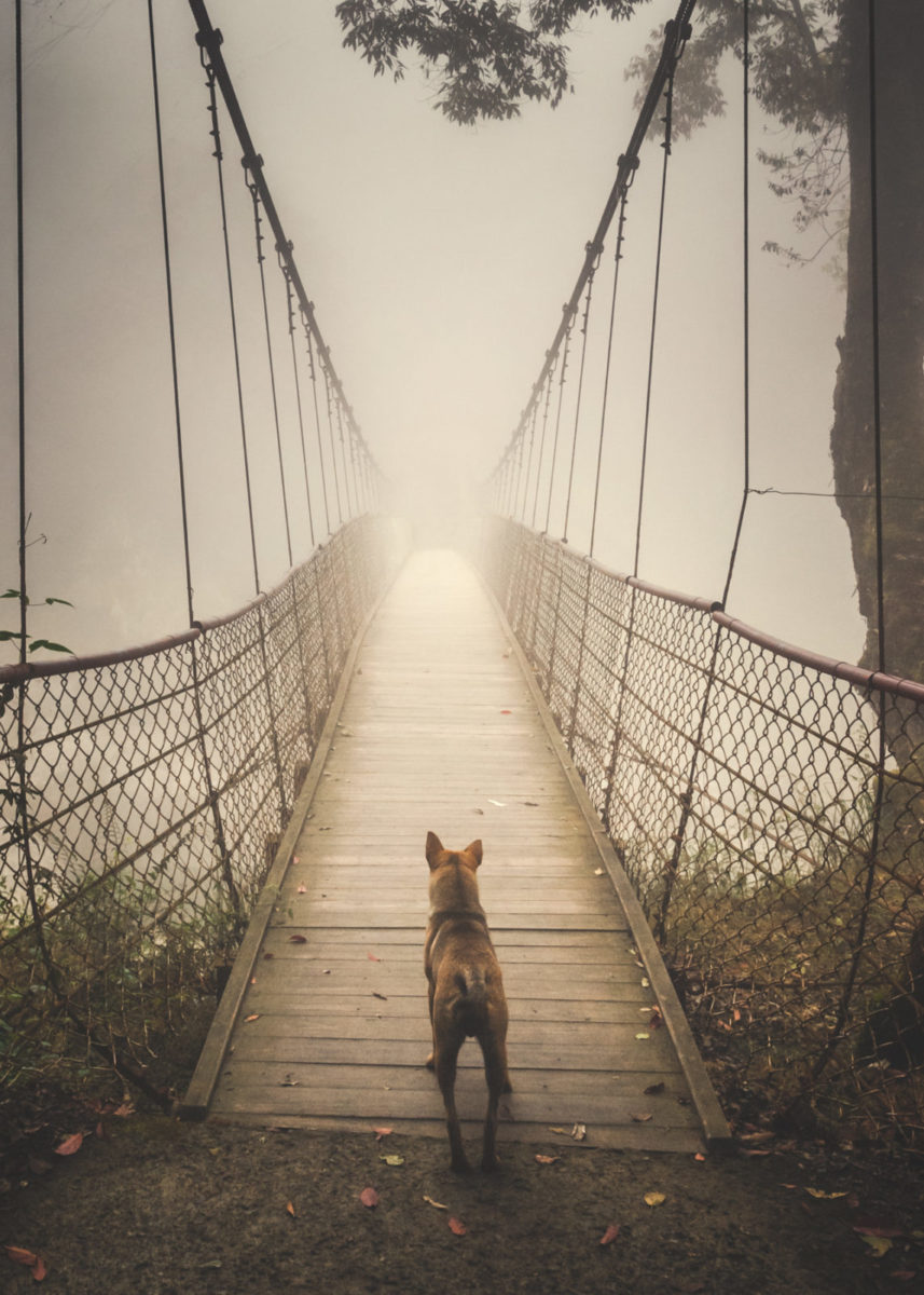 "1st place, Travel category: ""Stray Dog"" by Shuwen Lisa Wu"