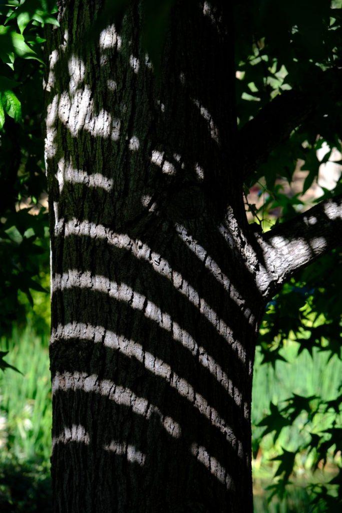 Erica Miller - Light on Tree