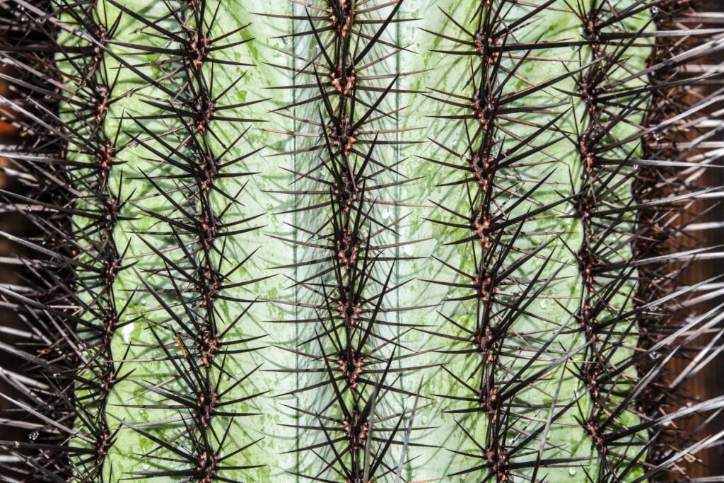 Randy Siegel - Cactus