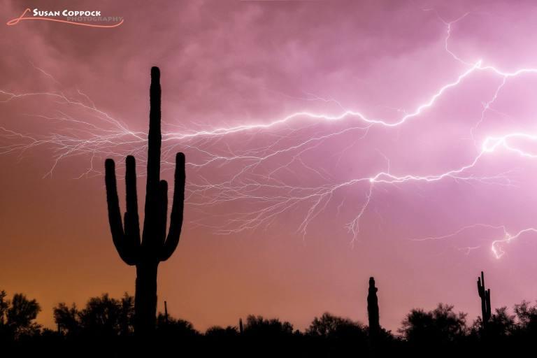 Cactus Lightning