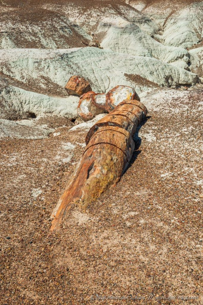 Alexander S. Kunz - Petrified log along the Crystal Forest trail, Petrified Forest National Park, Holbrook, Arizona. September 2018.
