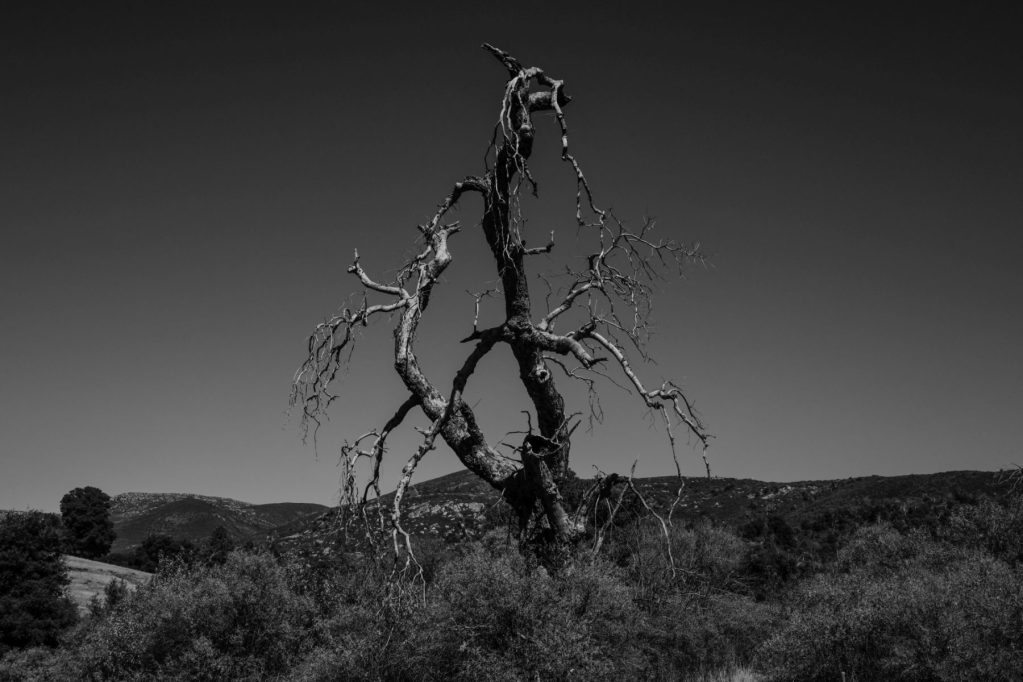 Randy Siegel - Dead Tree