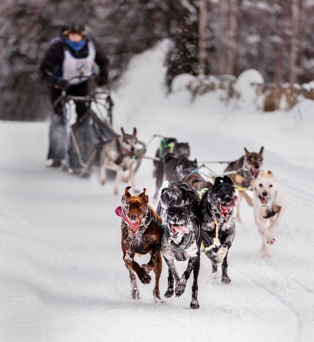 1st - Osia Strasner - Alaska Sled Dogs