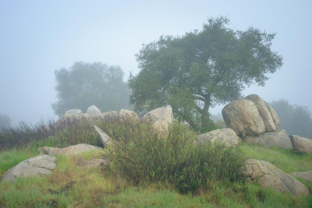 3rd - Alexander S. Kunz - Oaks and Boulders in Morning Fog