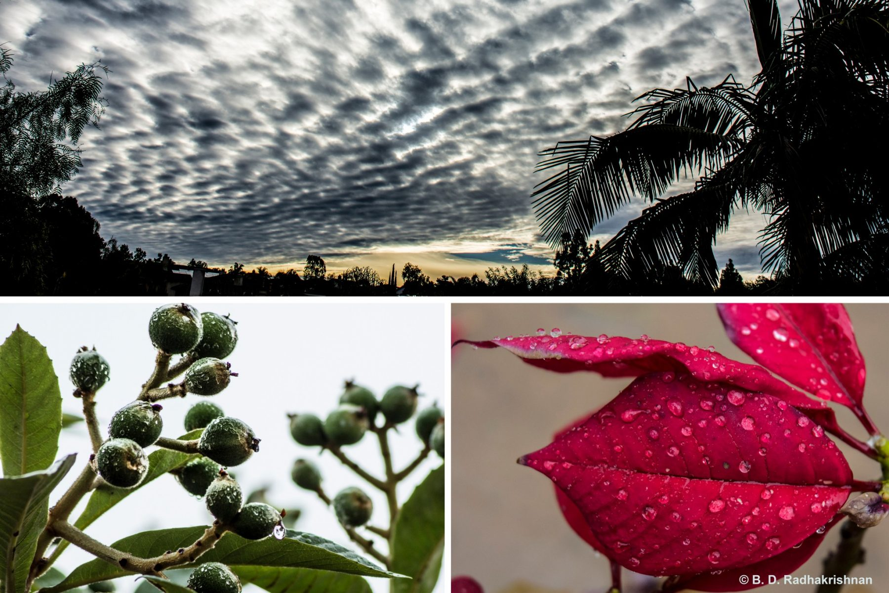 Ben Radhakrishnan - Scripps Ranch Rainy Days Collage