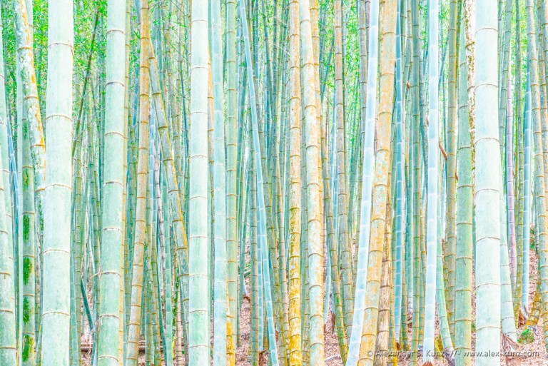 """""""Natural Obstacle"""" - a dense growth of bamboo makes passing through impossible. Photo (C) Alexander S. Kunz"""