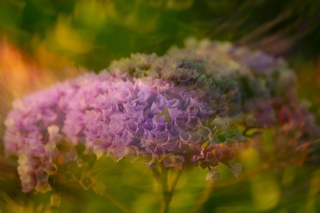 Erica Miller - Sea Lavender Spin
