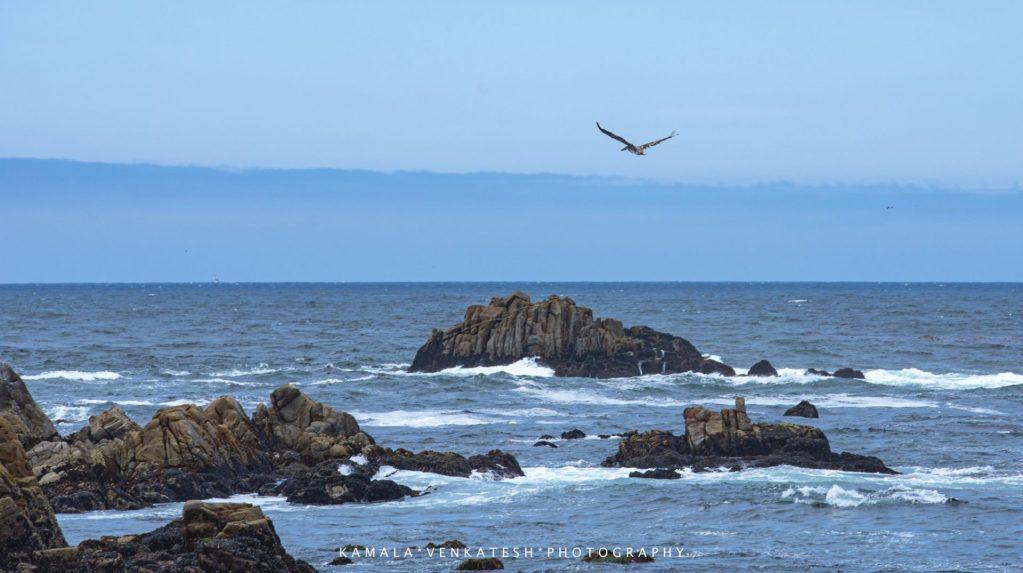 Kamala Venkatesh - Blue Ocean with Pelican