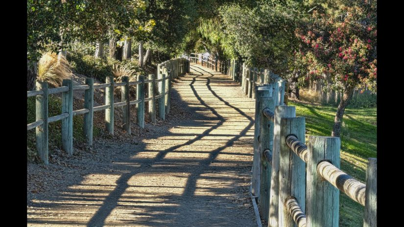 Dean Angelico - Twin Oaks Trail