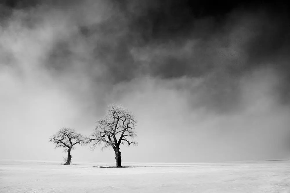 Cole Thompson -- Two Trees in Lifting Fog, 2007