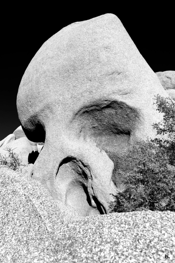 Dan Bucko - Skull Rock Joshua Tree