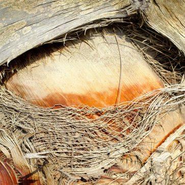 Palm Eye