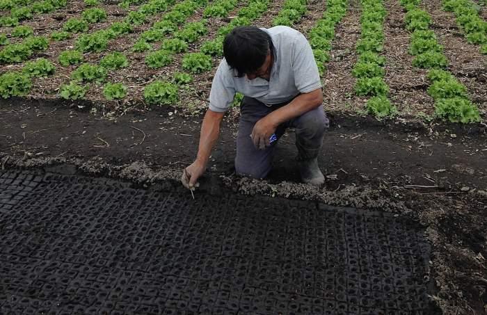 Cultivo en chinampas. La chinampa-refugio para la conservación del axolote en un Xochimilco sostenible
