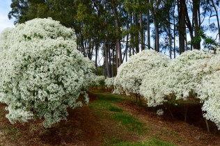 We saw these white bushes for miles along the highway; we simply had to stop and take a closer look.