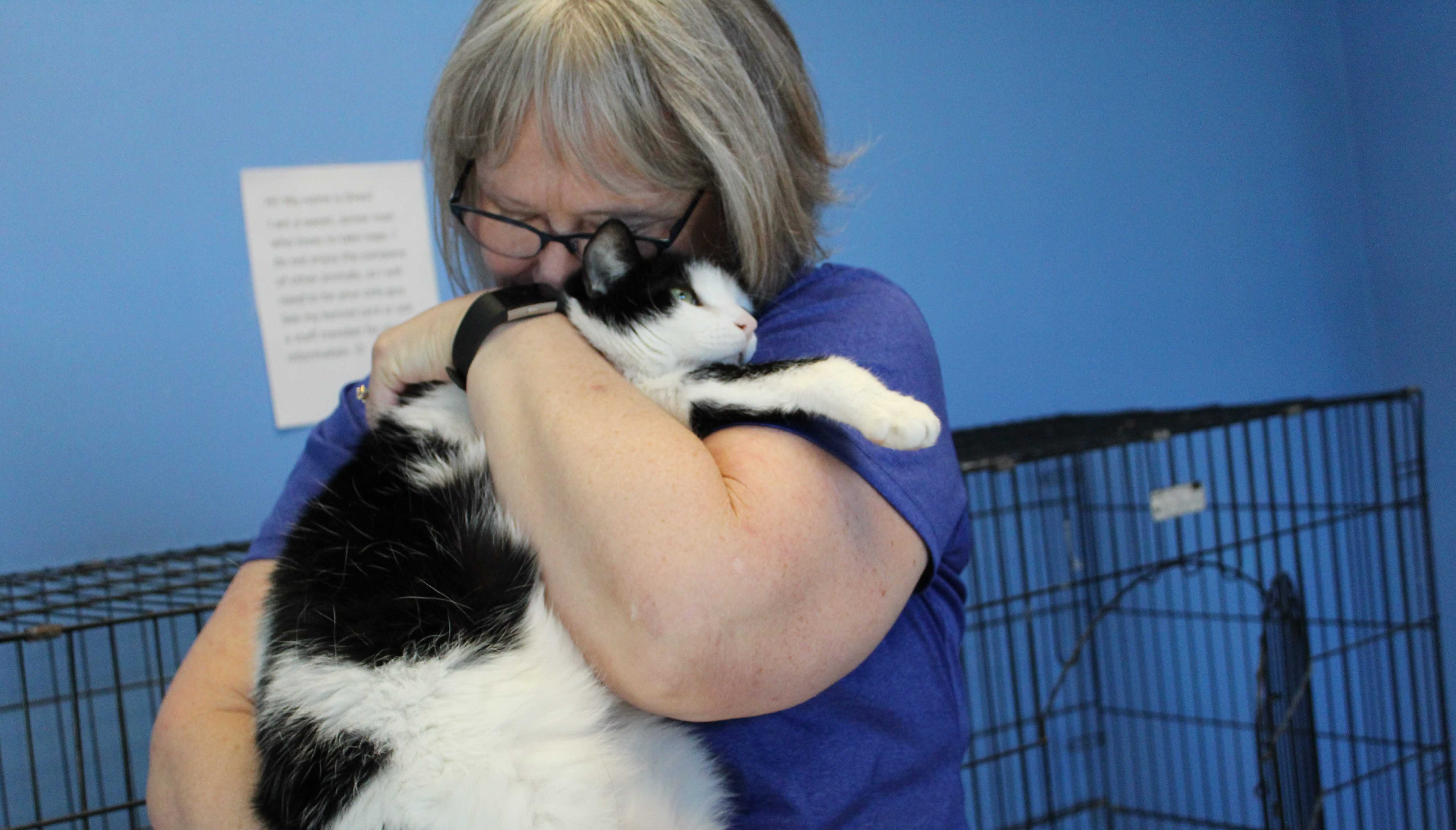 JENNY NGUYEN A caretaker hugs Oreo Wednesday, Jan. 17. Oreo doesn't do well around other cats and has been at the Brookings Regional Humane Society for quite some time. The Brookings Regional Humane Society is located at 120 W Second St S, Brookings, SD 57006.