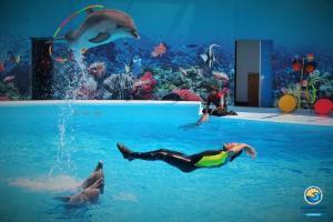 Дельфинарий Оскар-Геническ приглашает на первое в этом сезоне шоу
