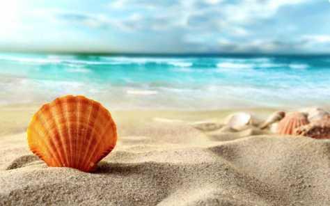 summer-beach-sea-sand-shell