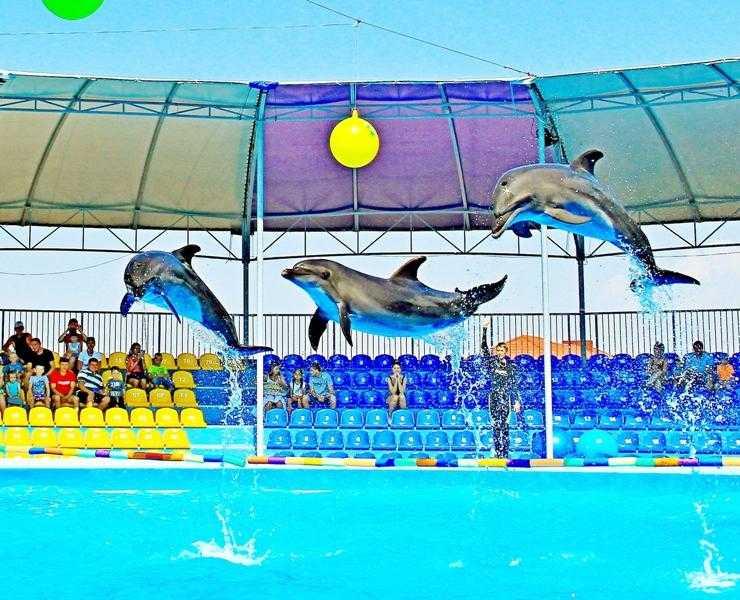 """17 июня состоится открытие сезона в дельфинарии """"Оскар-Геническ"""""""
