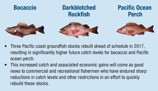 NOAA Report Shows Reduction in Overfishing of U.S. Stocks