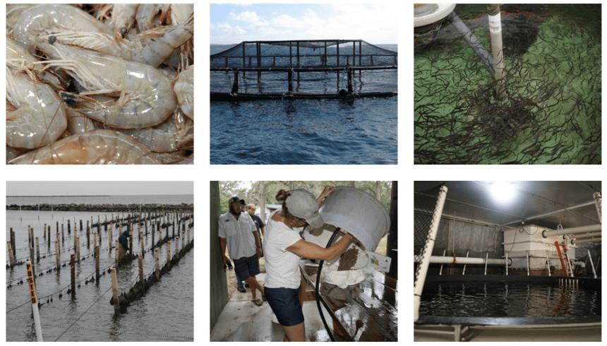 Sea Grant aquaculture