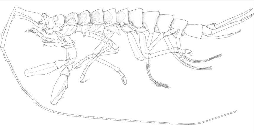 New Antarctic crustacean species