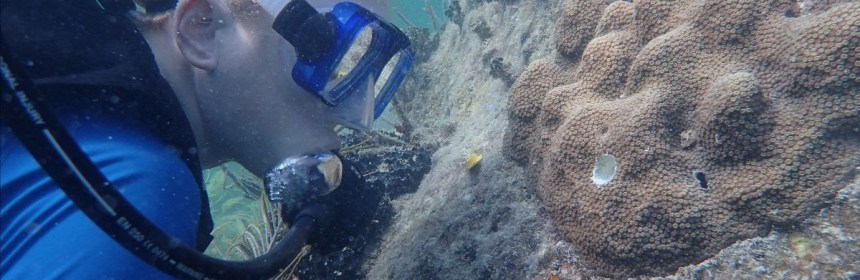 Mote's Dr. Hanna Koch observes outplanted mountainous star coral at a reef in the Florida Keys.