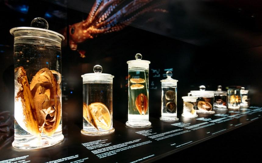 Senckenberg Museum- Deep Sea. Photography- Marcus Sies