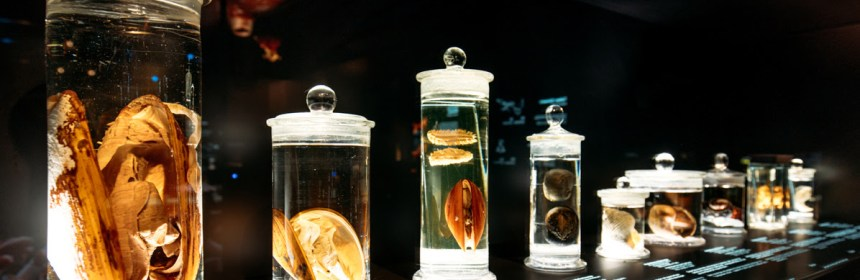 Senckenberg Museum- Deep Sea. Photography- Marcus Sies