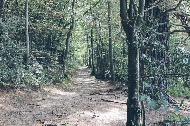 stang bihan forêt finistère