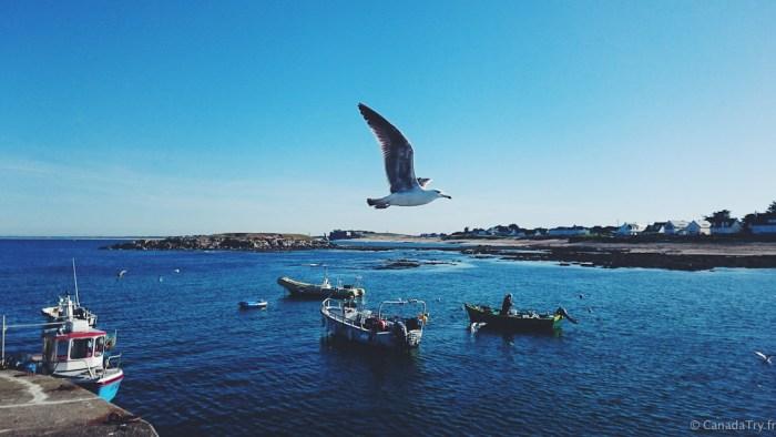portivy sur la presqu'île de quiberon