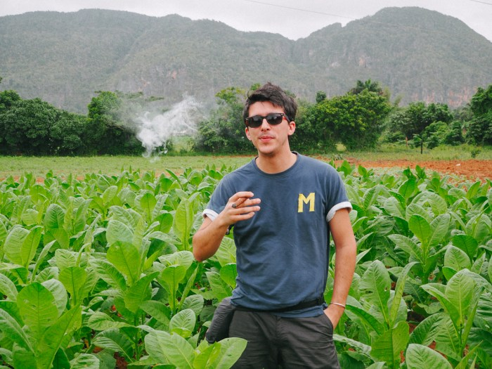 champ de tabac à vinales