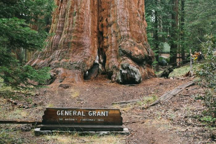 taille tronc d'arbre general grant