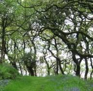 woodland path on Exmoor