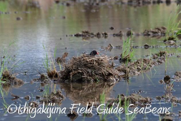 7.18 バードウオッチング 野鳥撮影 ガイド 3