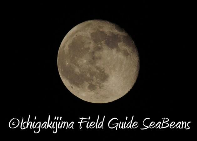 7.21石垣島 ナイトツアー 夜の野鳥撮影7