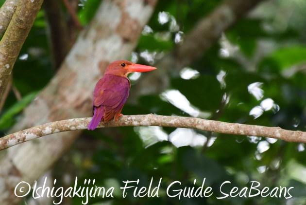 7.18 バードウオッチング 野鳥撮影 ガイド 14