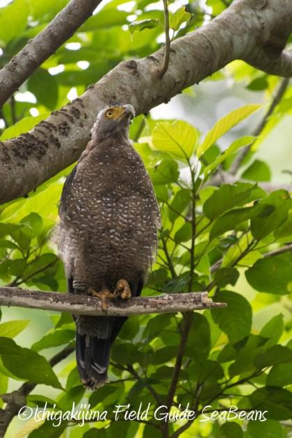 7.18 バードウオッチング 野鳥撮影 ガイド 16
