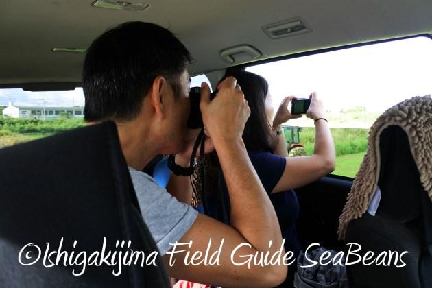 8月17日石垣島バードウオッチング&野鳥撮影10