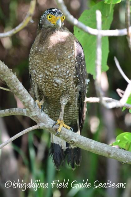 8月4日鳥獣保護区域等巡回調査10