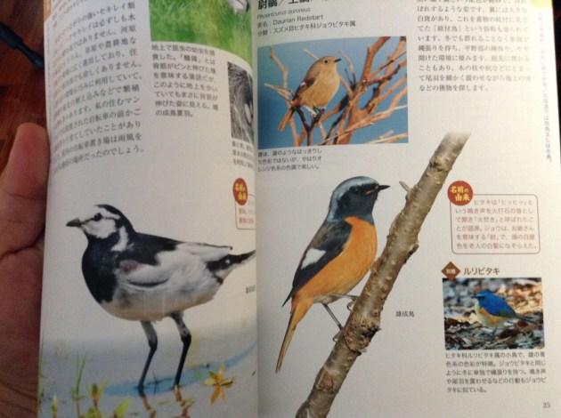 野鳥の呼び名事典2