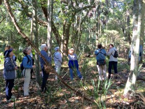 """""""We can hear you ... """" - SIB members during """"Birding with David Gardner"""" at St. Christopher's on April 21, 2016. Patricia Schaefer"""