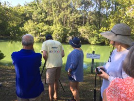 Using the scope to get a close look at the Great Egrets