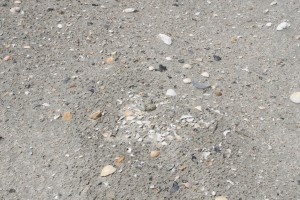 Wilson's Plover eggs camouflaged in the beach sand.