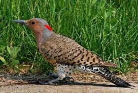 Bird D