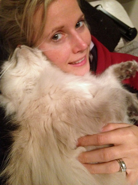 Blue lynx point Siberian cat Stoli at 19 months old with Emily