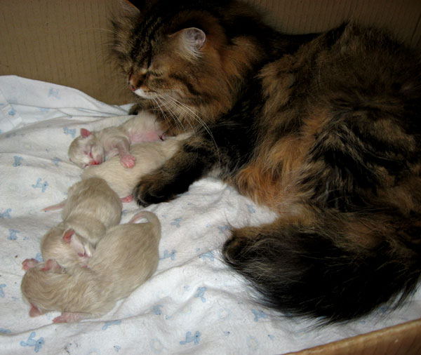 Cici and the K Litter